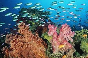 http://israeltripplanner.com/images/items/548/thumb300_coral_beach_eilat.jpg